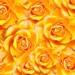 Close up of roses flowers background — Stock Photo