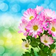 Gerber flower — Stock Photo #22459417