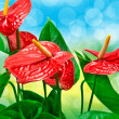 Anthurium flower — Stock Photo