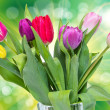 Tulip flowers — Stock Photo