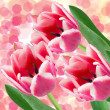 Tulip flowers - Stock Photo