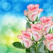 Stock Photo: Rose flower