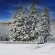 Foto Stock: City park in winter time.