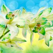 Stock Photo: Orchid flower