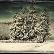 City park in winter time. — Foto Stock