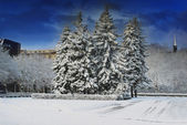 City park in winter time. — Stock Photo
