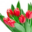 Stock Photo: Tulip flowers