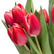 Tulip flowers — Stockfoto #41444827