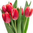 Foto de Stock  : Tulip flowers