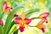 Fiore orchidea — Foto Stock