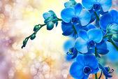 蘭の花 — ストック写真