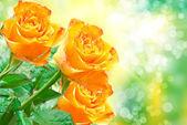 Fleur rose — Photo