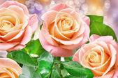 玫瑰花朵 — 图库照片