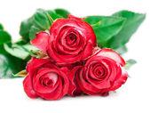 цветок розы — Стоковое фото
