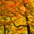 Bright Fall Foliage — Foto Stock