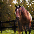 Dramatic Autumn Horse — Stockfoto