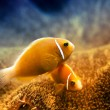 Underwater Clownfish and Anemone — Stockfoto