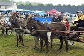 Day donkeys — Stock Photo