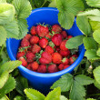 Fresh strawberry — Foto de stock #25293419