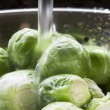 Rinsing Sprouts — Stock Photo