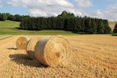 Bale of straw in front of forest — Stock Photo