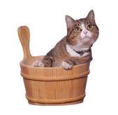Pet in wooden bowl — Stock Photo