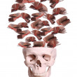 Royalty-Free Stock Photo: Skull with flying books