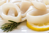Raw squid rings — Stock Photo