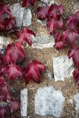 Colores jesień — Zdjęcie stockowe