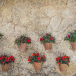 Stock Photo: Flowers in Valldemossa