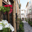 Flowers in Valldemossa — Stock Photo