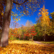Autumn beauty — Stock Photo #17410763