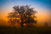 Misty tree on a early autumn morning — Stock Photo