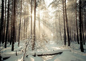 Beautiful winter forest and the road — Stock Photo