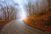 秋の林道 — ストック写真