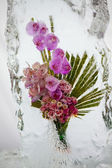 Beautiful flowers with ice — Stock Photo