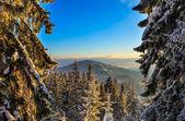 Alberi ricoperti di brina e neve in montagna — Foto Stock
