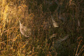 Spider web in a meadow on a foggy morning — Stock Photo