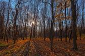 秋季 trees.fall — 图库照片