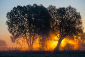 Foggy landscape with a tree silhouette on a fog at sunrise. — Stock Photo