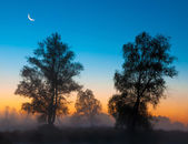 Autumn landscape, trees in the mist at dawn — Stock Photo