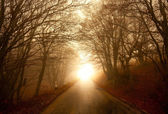 Road through misty forest — Stock Photo