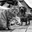 Cat and dog — Stock Photo #18302451