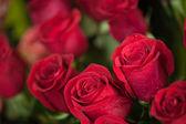 Röda rosor — Stockfoto