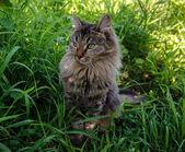 Pretty cat — Stock Photo
