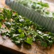 Royalty-Free Stock Photo: Cutting coriander leaves