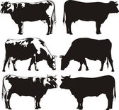 Cattle - cow and bull — Vector de stock