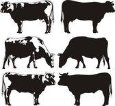Sığır - inek ve boğa — Stok Vektör
