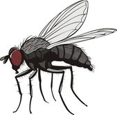 Housefly — Vettoriale Stock