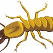 Royalty-Free Stock Vector Image: Termite